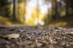 Gravel on Rural Country Road Through Forest. Surface Level Low Angle View of Small Stones as part of Gravel Road in Isolated Forest Area in Tirol, Austria with Stock Photo
