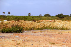 Gravel and soil on construction site to be on  field of sugarcane Stock Photography