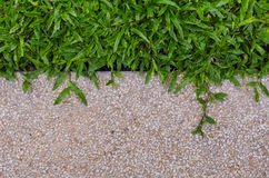 Gravel texture and grass for background. Gravel texture floor and grass for background Royalty Free Stock Photos