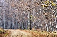 Gravelez la route de campagne par la belle forêt dense en automne en retard, montagnes de Homolje Photo libre de droits