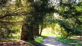 Gravelez la route par un tunnel fait d'arbres en parc vert ensoleillé photos stock