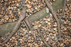 Gravels with root Royalty Free Stock Photography