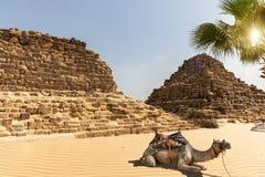 Graven in Giza en een kameel naast hen, Egypte royalty-vrije stock afbeelding