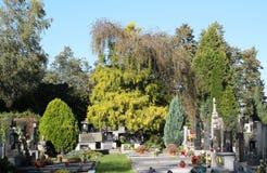 Graven onder de bomen royalty-vrije stock foto's