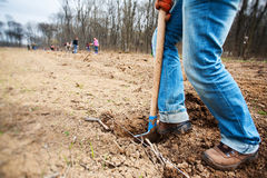 Gravende grond die een schop met behulp van Stock Afbeelding