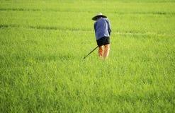 Gravende landbouwer in het padieveld Royalty-vrije Stock Afbeelding