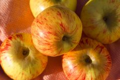 Gravenstein Apples Royalty Free Stock Image