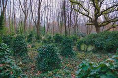 Lost graves Highgate Cemetery. Graves covered in ivy in the East Cemetery in Highgate Cemetery in London. The East cemetery is set in 9 acres of land. It was Royalty Free Stock Images