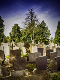 Graves in the evening Royalty Free Stock Image