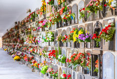 Graves with flowers on a wall Royalty Free Stock Image