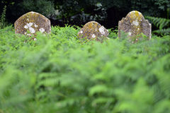 Graves Stock Photo