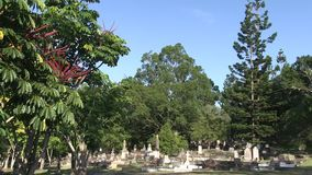 Graves under the trees the graves have fertilized. This cemetery dates to 1871, and is nestled between a mountain and the inner city suburbs of Brisbane. The stock video