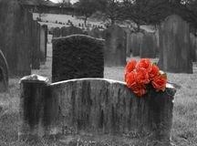Gravestone. Blank headstone in graveyard with bunch of red roses Stock Image