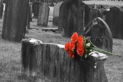 Gravestone. Blank headstone in graveyard with bunch of red roses Stock Photos