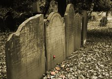 Gravestone. Sepia shot of a row of headstones in graveyard with a single red rose Royalty Free Stock Photo