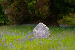 Gravestone in bluebells field stock photos