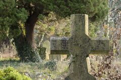 A gravestone and tree in the Old Cemetery Southampton Common Royalty Free Stock Images