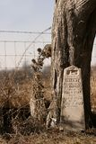 Gravestone by tree. In cemetery Royalty Free Stock Photo