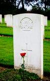 gravestonemilitär Arkivbild