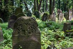 Old gravestones in the New Jewish Cemetery in Miodowa Street, Kazimierz, Krakow, Poland. Gravestones amidst the undergrowth in the New Jewish Cemetery in stock photo