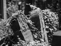 Old gravestones in the New Jewish Cemetery in Miodowa Street, Kazimierz, Krakow, Poland. Gravestones amidst the undergrowth in the New Jewish Cemetery in stock photos
