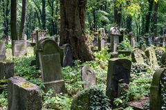 Old gravestones in the New Jewish Cemetery in Miodowa Street, Kazimierz, Krakow, Poland. Gravestones amidst the undergrowth in the New Jewish Cemetery in royalty free stock images