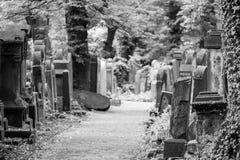 Old gravestones in the New Jewish Cemetery in Miodowa Street, Kazimierz, Krakow, Poland. Gravestones amidst the undergrowth in the New Jewish Cemetery in royalty free stock photos