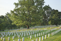 Gravestones below beautiful tree in Arlington National Cemetery. Gravestones with American flags below a beautiful tree in Arlington National Cemetery on Royalty Free Stock Photography