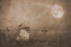 Gravestones in moonlight stock photography