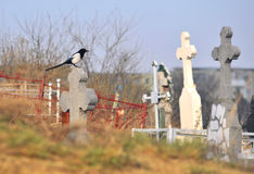 Graveyard. In day light with a bird on a cross Stock Photography