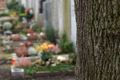 Graveyard. Tombstones on a graveyard behind a tree - focus is on the tree, which is a great copy space opportunity royalty free stock images