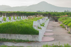 Graveyard arrange of Chinese culture. Stock Images