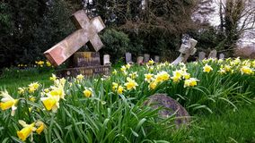 Graveyard with daffodils Stock Photo