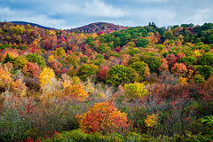 Graveyard Fields on the Blue Ridge Parkway in autumn Stock Images