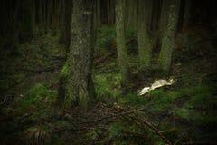 Graveyard. Forest, bones, skeleton, swamp, nature, czech republic, czechia, darkness, death, dark, green, depression, thoughts, swampy, water Royalty Free Stock Photo