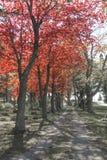 Graveyard god light shining through trees in cemetery Royalty Free Stock Photos