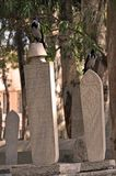 Graveyard in mosque Royalty Free Stock Photography