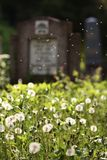 Graveyard. A powerful contrast between fresh vegetation in bloom and grave crosses, between life and death which have a profound meaning: the perishing character Stock Images