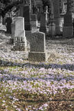 Graveyard in Spring Royalty Free Stock Image