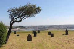 Graveyard under a tree Royalty Free Stock Photos
