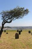 Graveyard under a tree Stock Photos