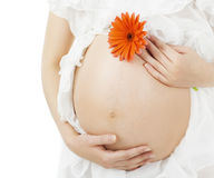 Gravid buk, havandeskapkvinnamage med blomman Royaltyfria Bilder