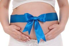 Gravid buk med strumpebandsorden Royaltyfri Foto