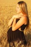 gravid flicka Royaltyfri Foto