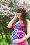 Gravid flicka i klänning i lavendelträdgård Royaltyfria Bilder