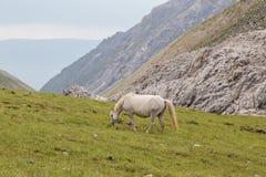 gravid häst Arkivbilder