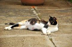 gravid katt Arkivfoton