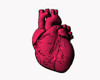 Gravieren der menschlichen Herzillustration stockbild