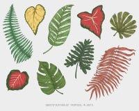 Gravierte, Hand gezeichnete tropische oder exotische Blätter lokalisiert, Blatt der unterschiedlichen Weinlese Anlagen schauend m Lizenzfreie Stockbilder