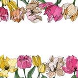 Gravierte Tintenkunst des Vektors Tulpe Botanische mit Blumenblume Federblatt Wildflower lokalisiert Feldgrenzverzierungsquadrat vektor abbildung